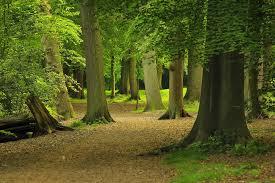 Le programme national de la forêt et du bois approuvé