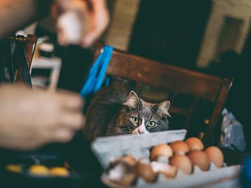 Comment avoir un chat zéro déchet ?