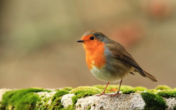 Chiens, poules, oiseaux : prendre soin de la biodiversité au jardin