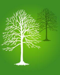 Bois-énergie favorise le développement durable
