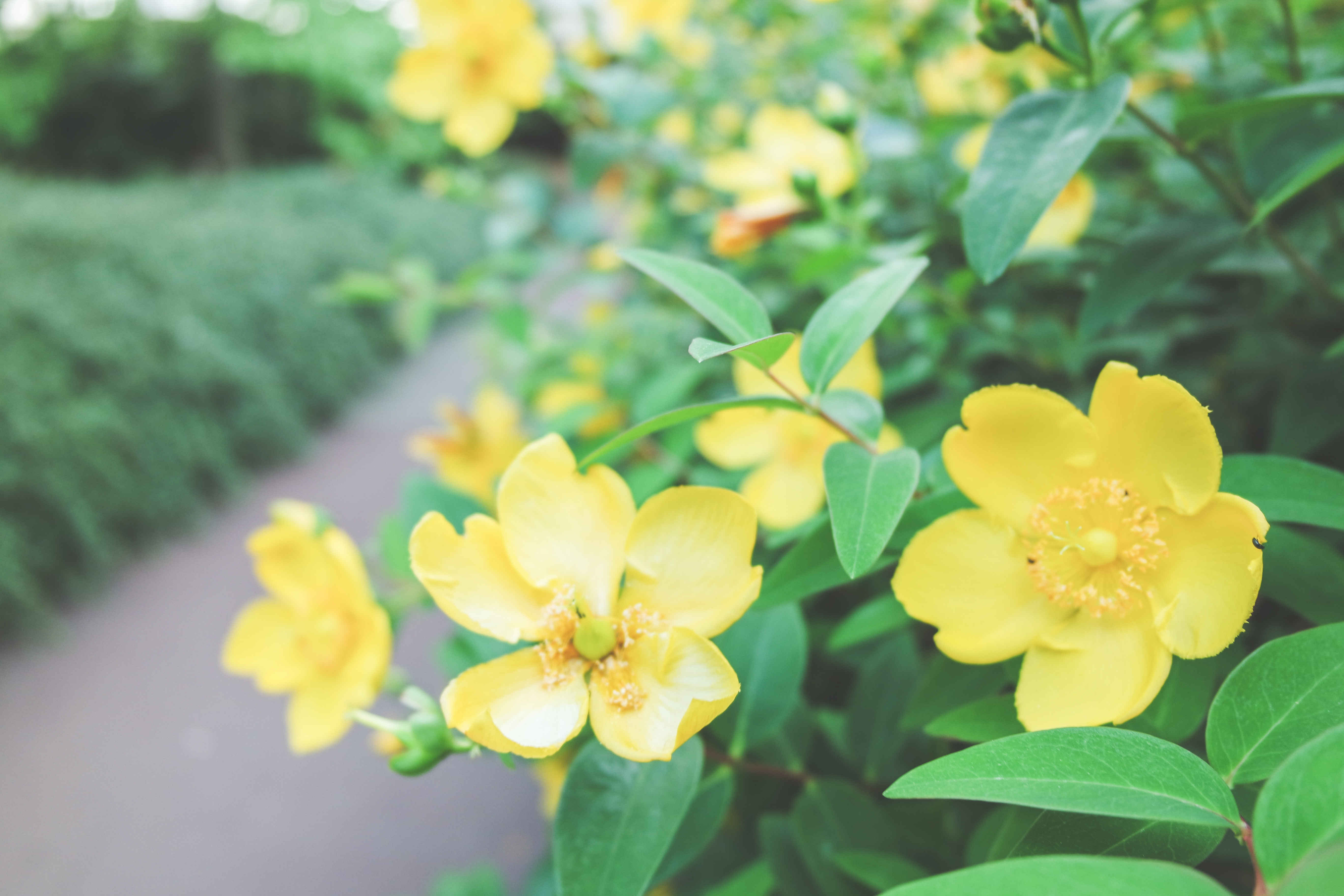 Les méthodes douces pour entretenir votre jardin