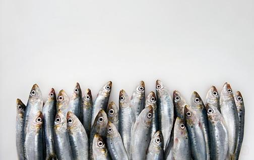 Quel poisson consommer en septembre ?