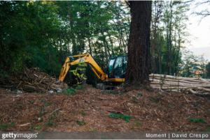 programme national de la forêt et du bois