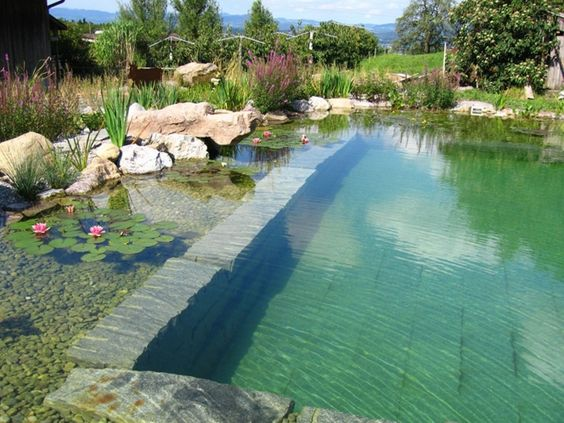 piscine-naturelle-ecologique