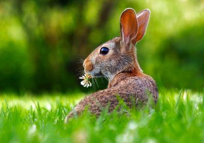 Conseils pour un jardin qui attire la biodiversité