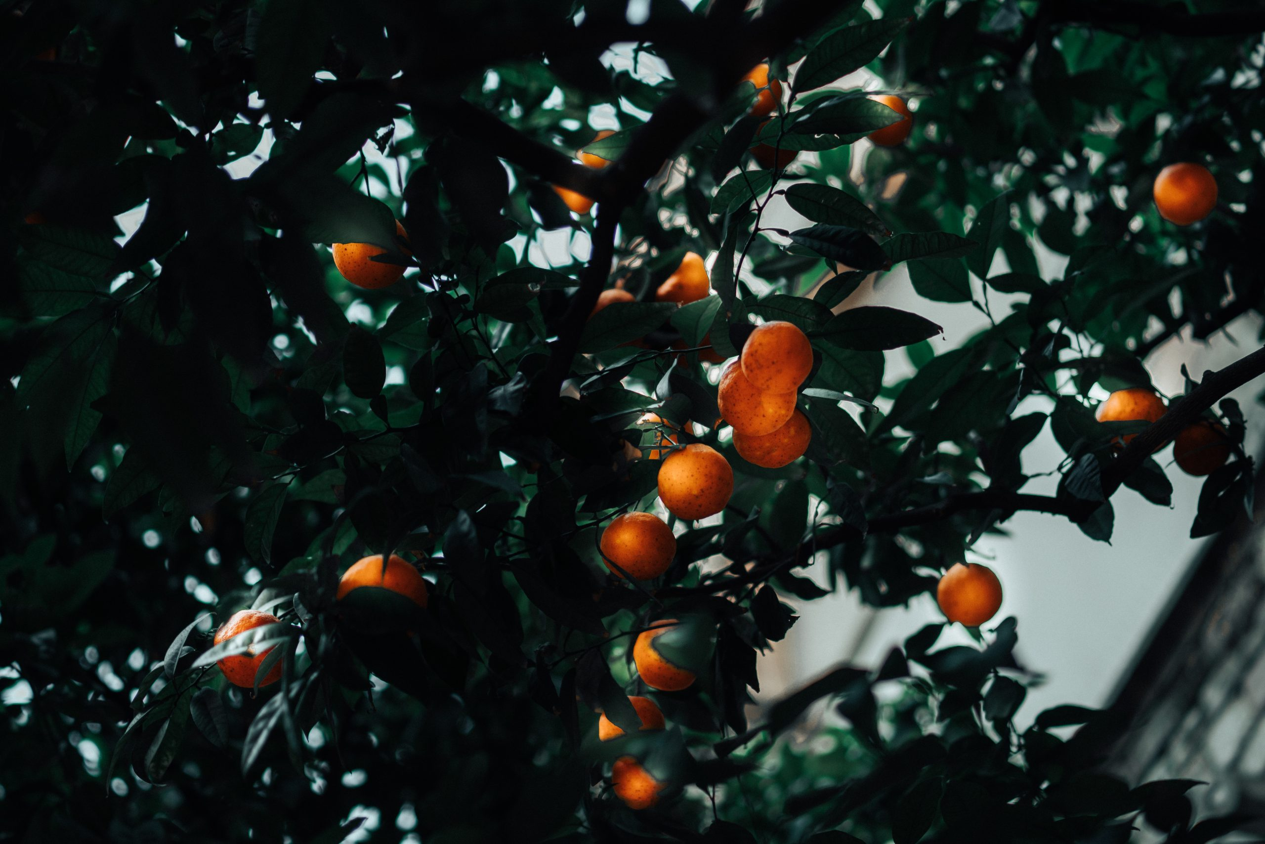 Comment bien entretenir ses arbres fruitiers ?