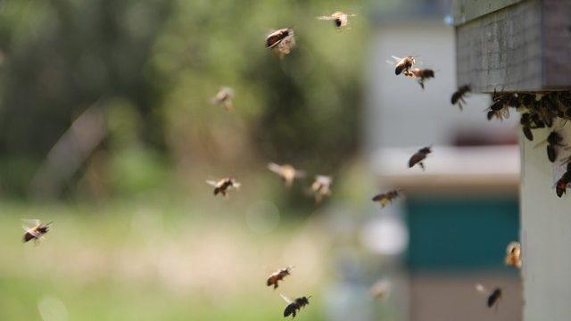 Comment fabriquer une ruche pour les abeilles ?